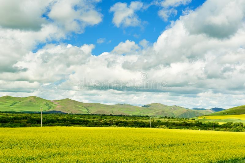 Голубое небо и белые облака в злаковике лета Hulunbuir стоковое изображение