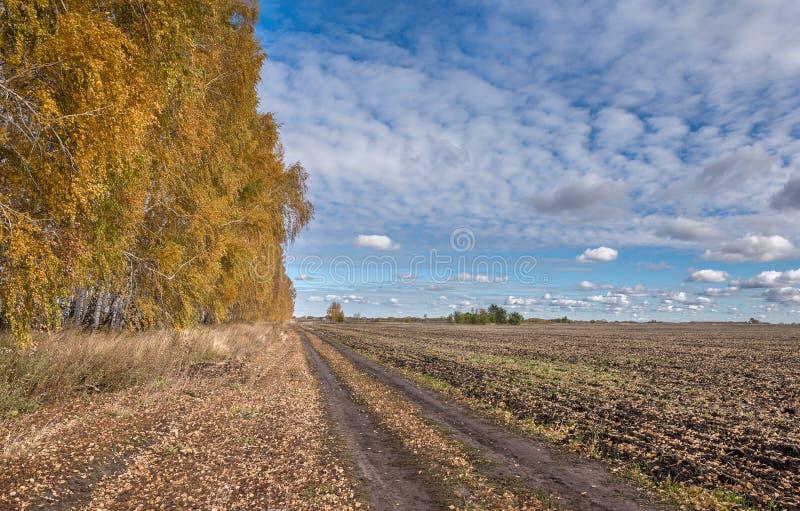 Голубое небо и желтая береза стоковая фотография rf