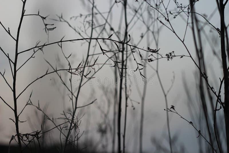 Голубое небо и хрупкие хворостины стоковая фотография