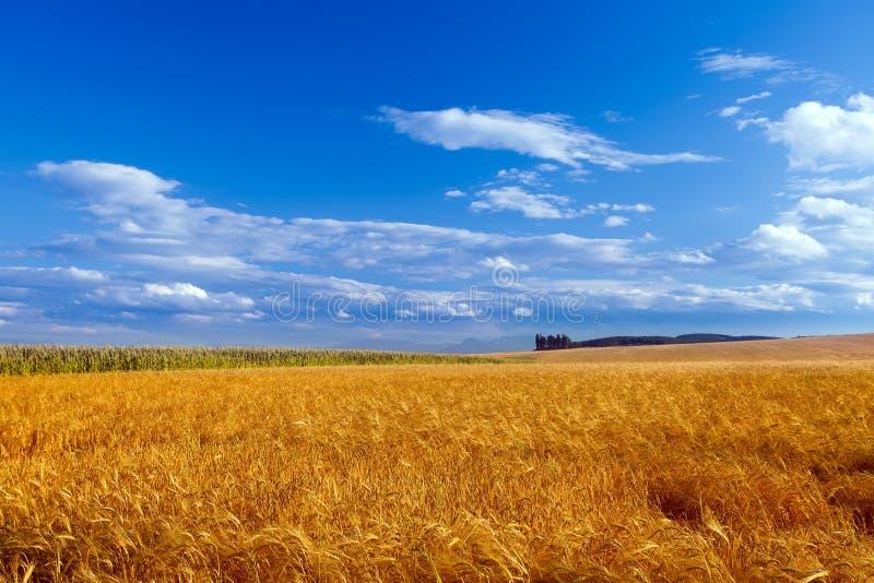 голубое небо ландшафта стоковое фото