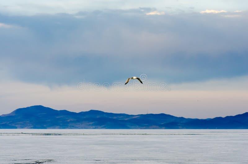 Голубое небо, озеро с горой и чайка сдирать стоковое фото
