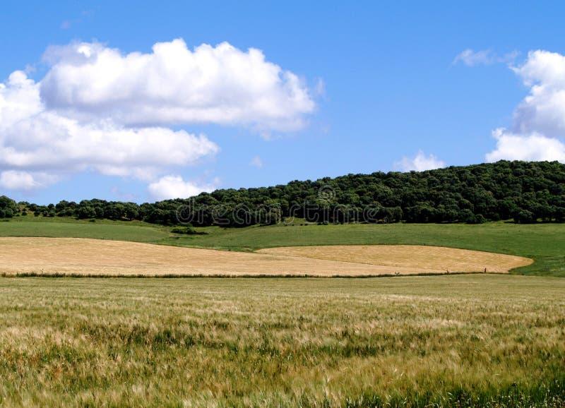 голубое небо сельской местности стоковая фотография rf