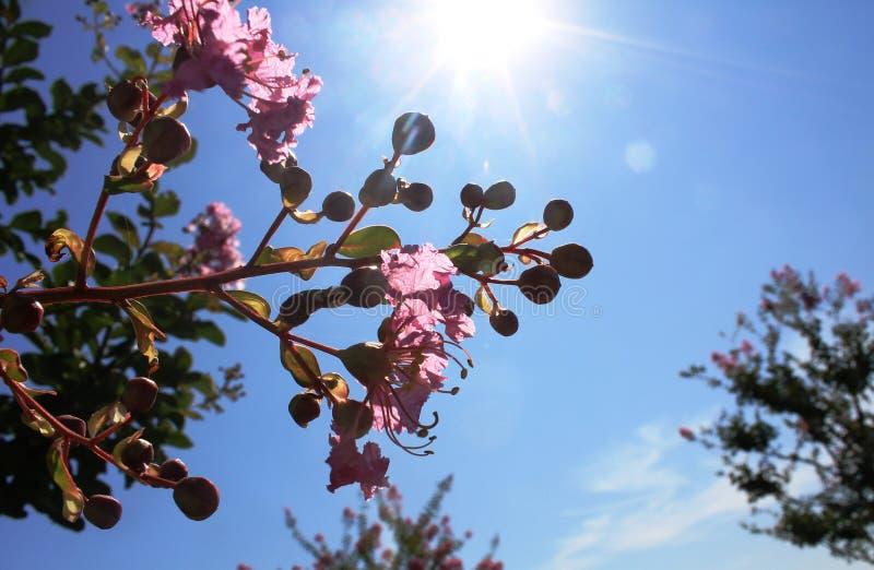 Голубое небо, солнце и цветки в летних месяцах стоковые изображения rf