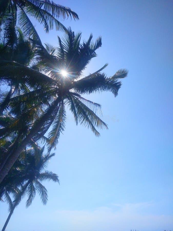 Голубое небо с кокосовой пальмой стоковое фото rf