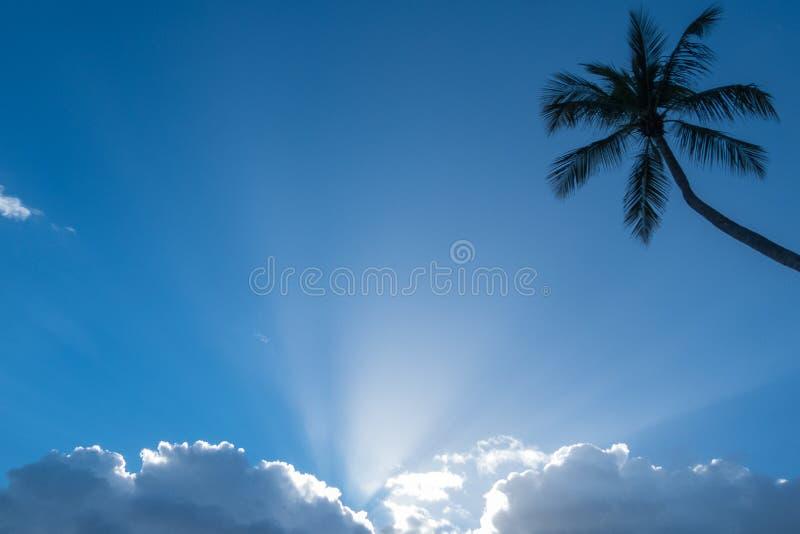 Голубое небо с пушистыми белыми облаками, солнечными лучами и силуэтом пальмы стоковая фотография rf