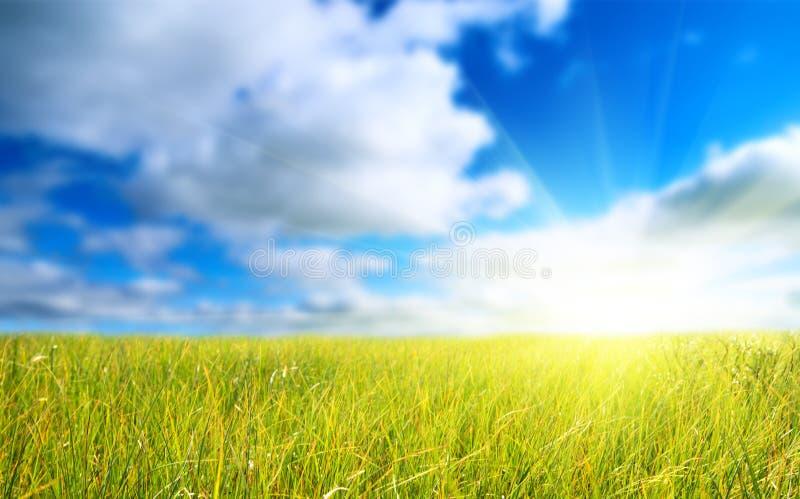 Download голубое небо травы поля стоковое фото. изображение насчитывающей снаружи - 6869882