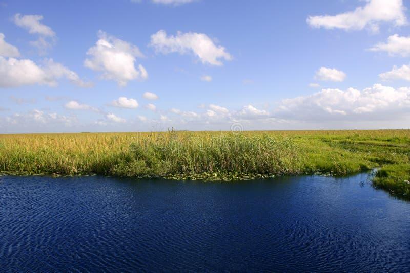 голубое небо florida болотистых низменностей стоковые фото