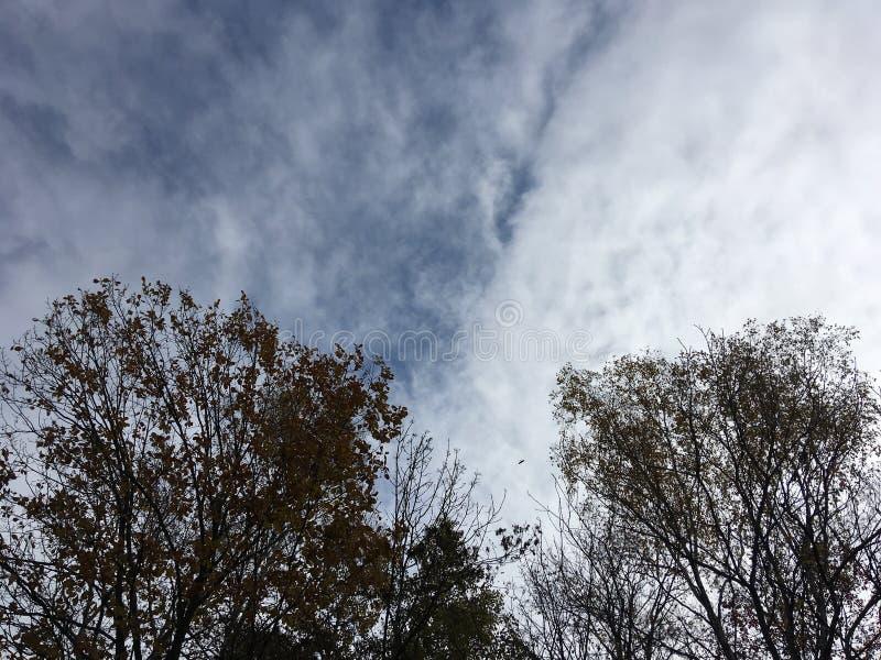 Голубое облачное небо, лесные деревья, предыдущая осень стоковое изображение