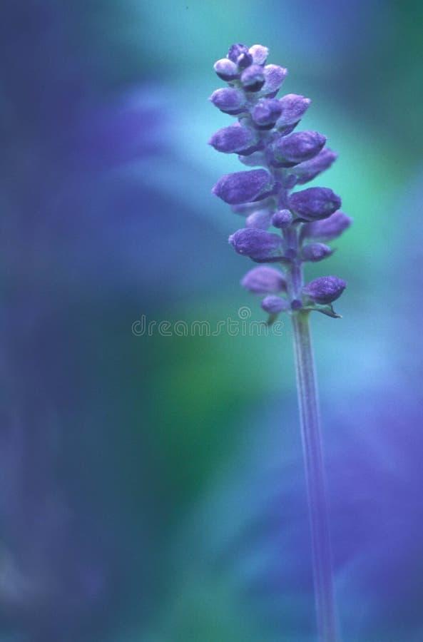 голубое поле Стоковые Изображения