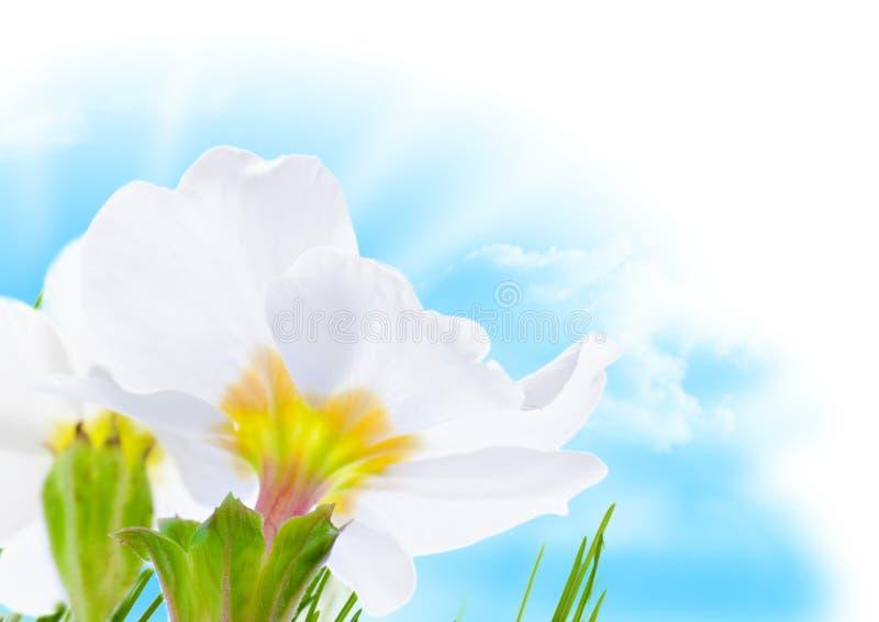 голубое солнце весны неба цветка граници стоковые фото