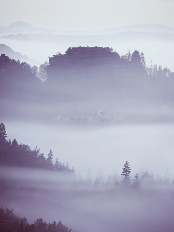 Голубое утро, взгляд над утесом и свежие зеленые деревья к глубокой долине вполне ландшафта весны светлого тумана мечтательного стоковые фото