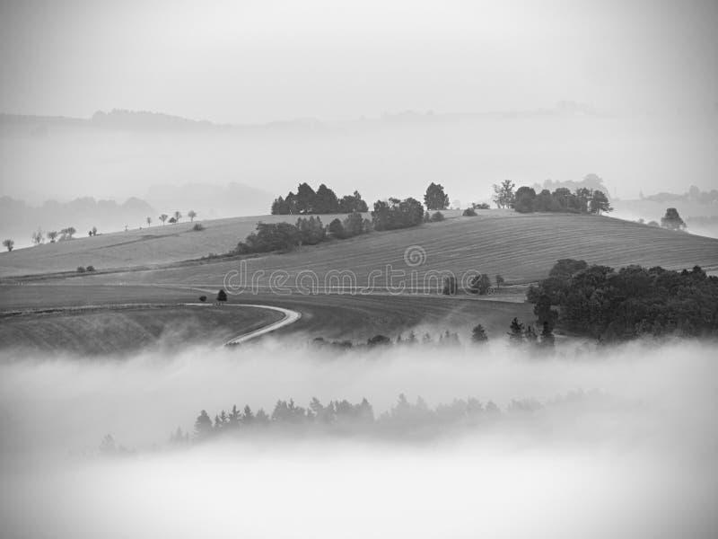 Голубое утро, взгляд над утесом и свежие зеленые деревья к глубокой долине вполне ландшафта весны светлого тумана мечтательного стоковое изображение