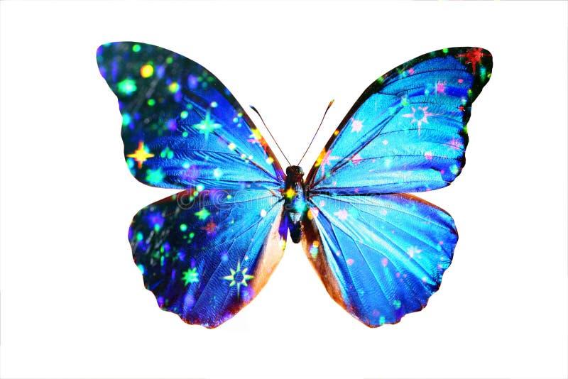 голубое morpho иллюстрация штока