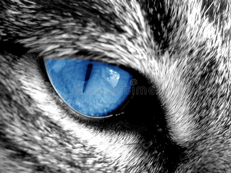 голубой глаз стоковое изображение rf