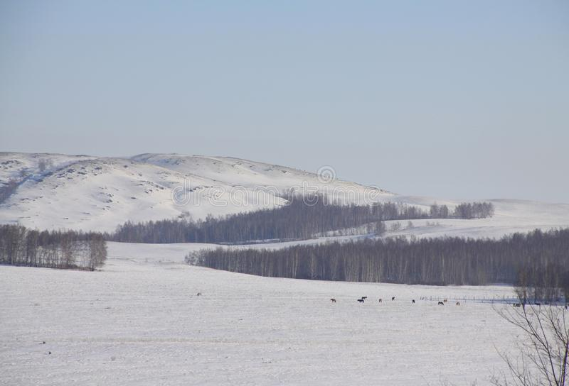 Голубой день в зиме стоковая фотография rf