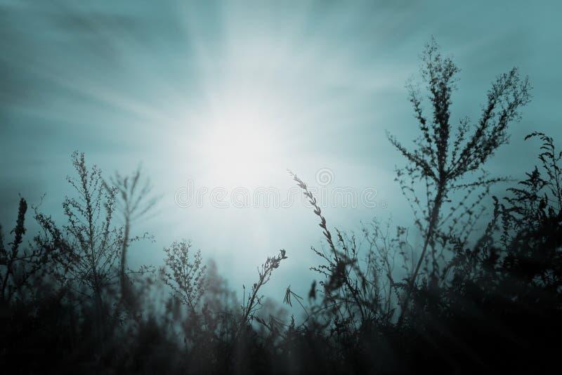 голубой заход солнца в октябре стоковое изображение rf