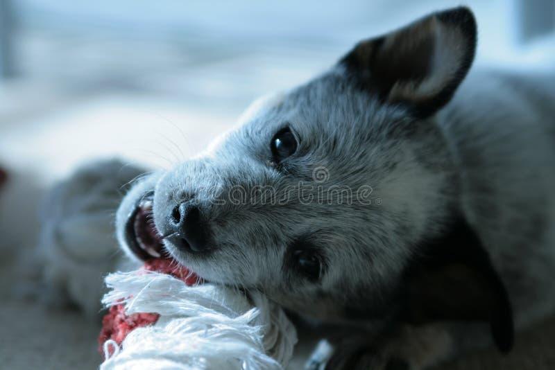 голубой исцелитель закоптелый стоковая фотография rf