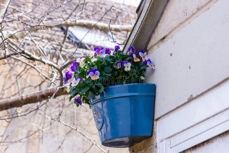 Голубой керамический плантатор заполненный с цветками альта зафиксированными к стене гаража стоковые фотографии rf