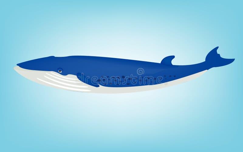 голубой кит иллюстрация вектора