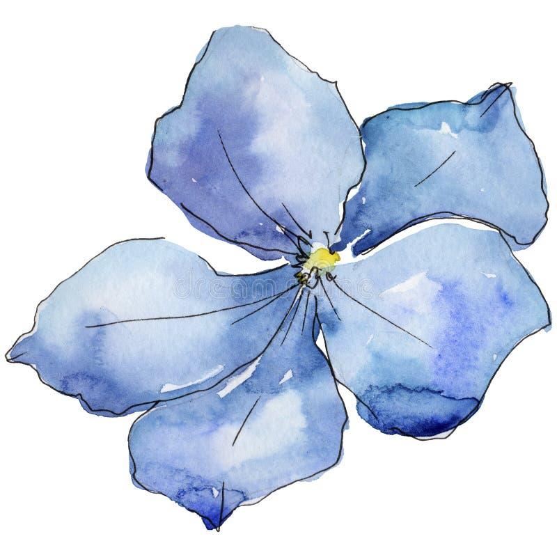 голубой льнен Флористический ботанический цветок Одичалый изолированный wildflower лист весны иллюстрация штока