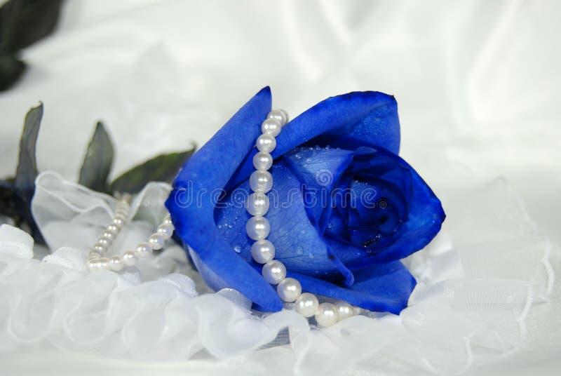 голубой оттенок стоковая фотография rf
