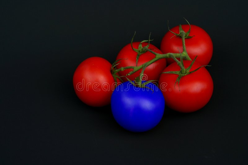 голубой томат стоковые фотографии rf