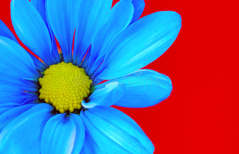 голубой цветок стоковое изображение
