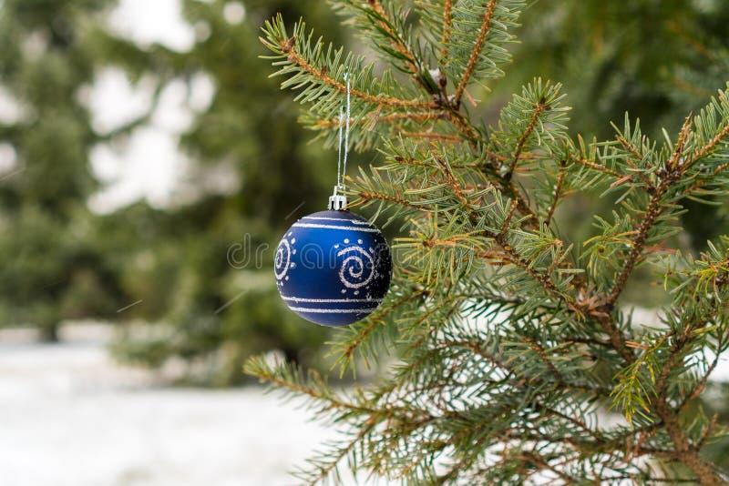 Голубой шарик рождества на ветви ели стоковое фото