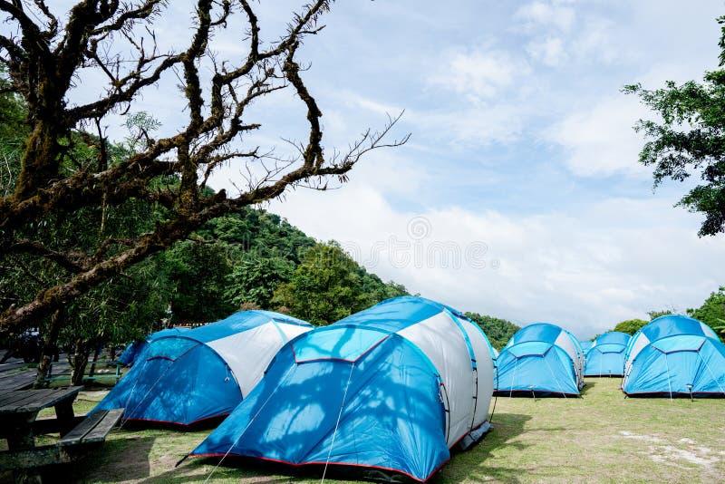 Голубой шатер получал распространение на злаковике В национальном парке стоковая фотография rf