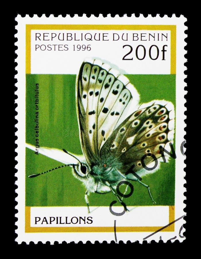 Голубой Argus (anteros) Ultraaricia, serie бабочек, около 1996 стоковая фотография
