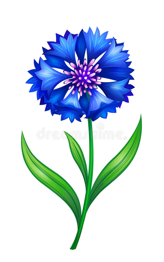 голубой cornflower иллюстрация штока