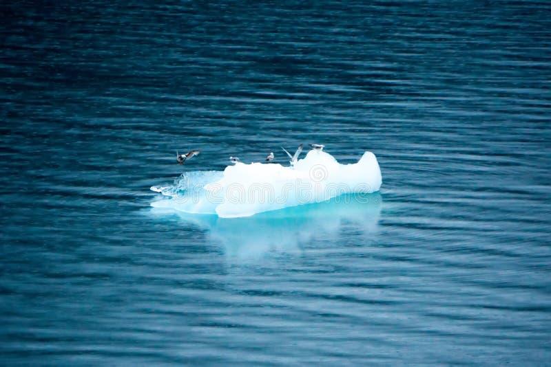 Голубые айсберги и ломти льда в воде близрасположенной Аляске стоковая фотография