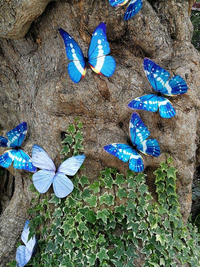 голубые бабочки в природе стоковое фото