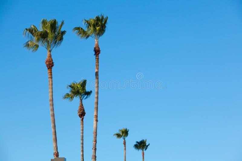 голубые валы неба ладони стоковое изображение rf