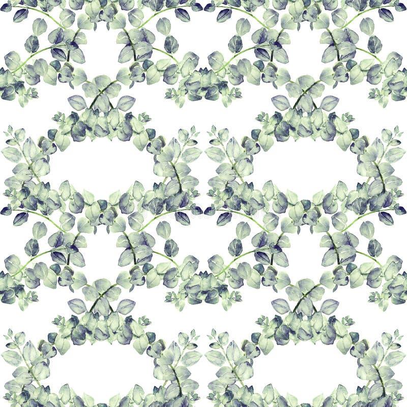 Голубые ветви tetragona эвкалипта с зелен-голубыми листьями, рукой покрашенная иллюстрация акварели, безшовный дизайн картины на  иллюстрация вектора