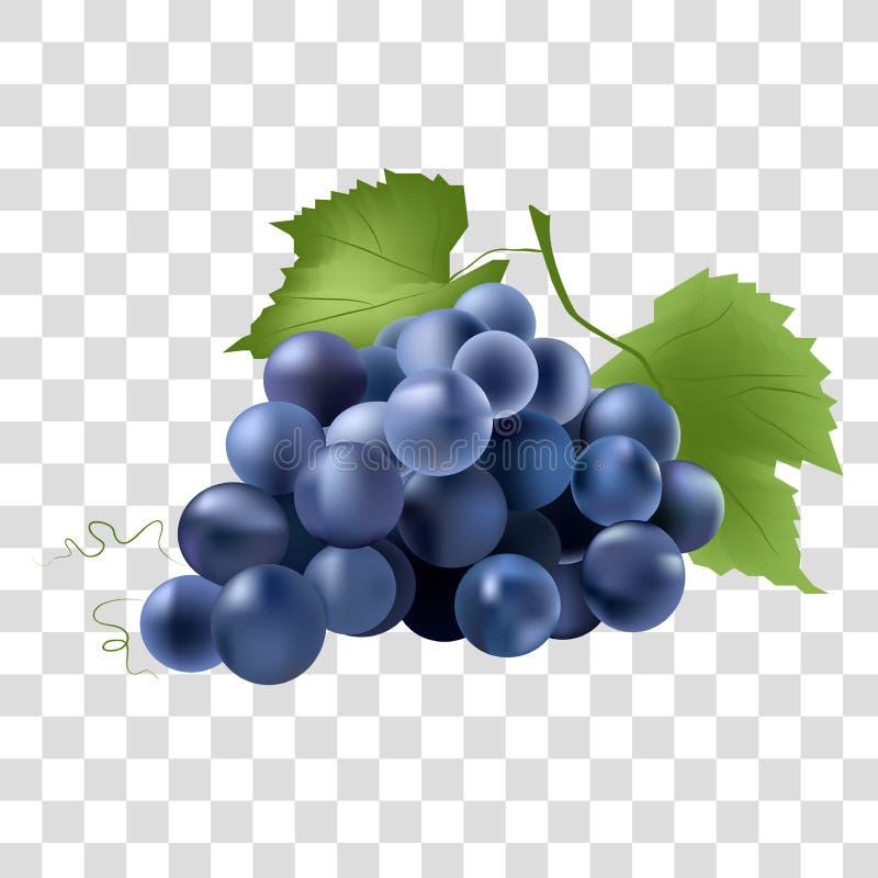 Голубые виноградины на светлой предпосылке иллюстрация штока