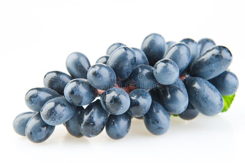 голубые виноградины пука стоковая фотография