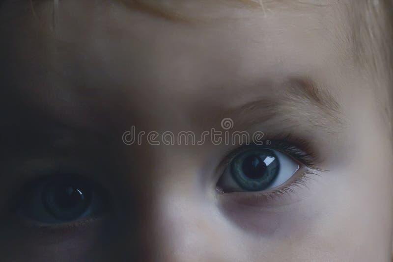 Голубые глазы младенца невиновные смотрят сразу на камере стоковая фотография rf