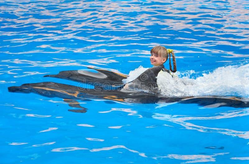 голубые дельфины ребенка плавая вода стоковое фото