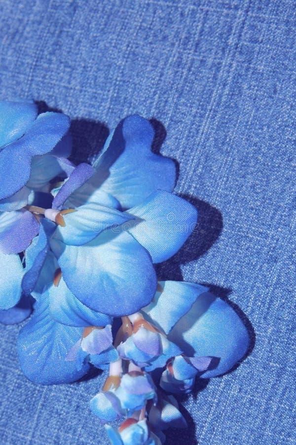 Download голубые джинсы стоковое фото. изображение насчитывающей bluets - 80108