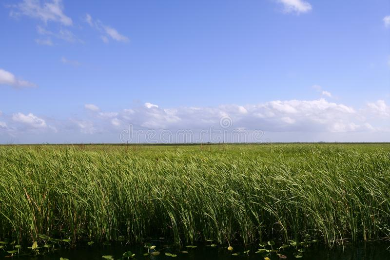 голубые заболоченные места неба florida болотистых низменностей стоковая фотография rf