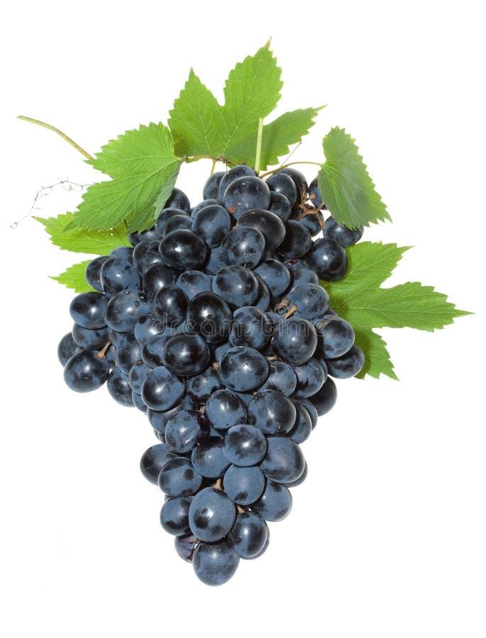 голубые листья виноградины стоковые изображения
