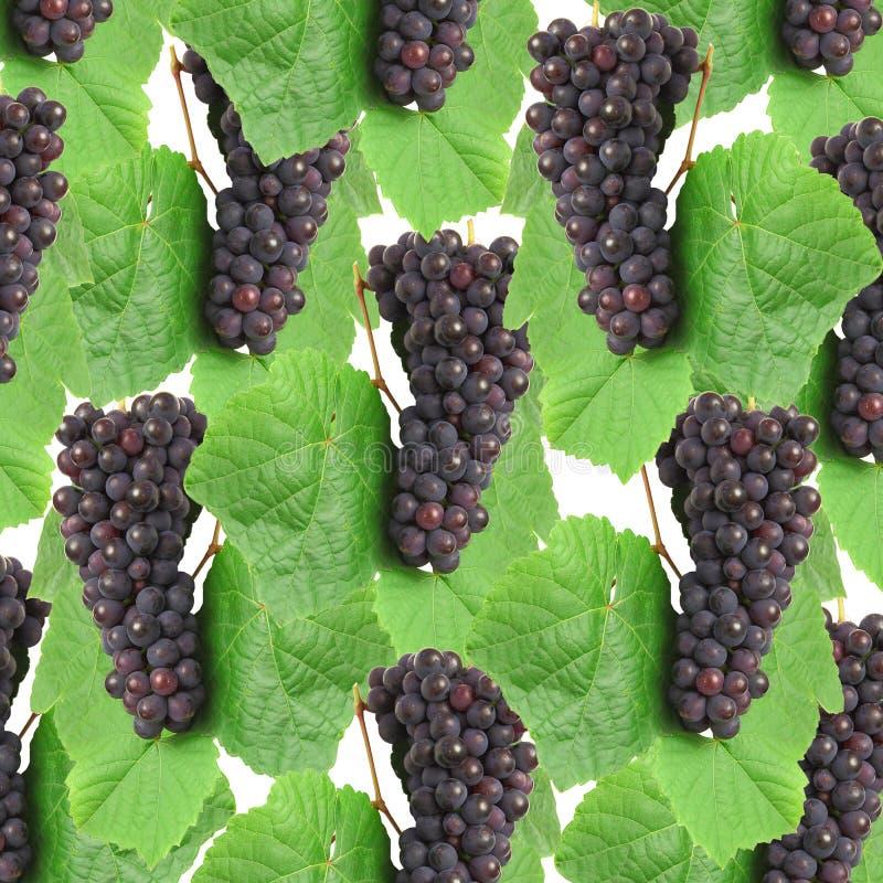 голубые листья зеленого цвета виноградины стоковое изображение