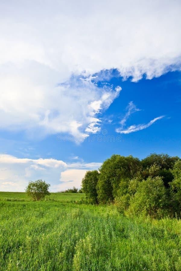 голубые небеса зеленого цвета травы стоковое фото