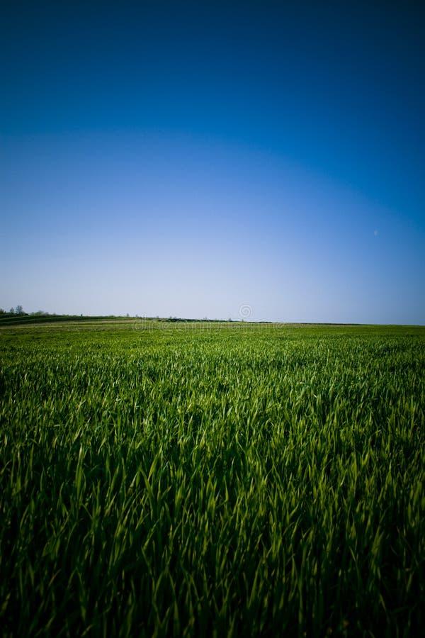 голубые небеса зеленого цвета травы стоковые фото
