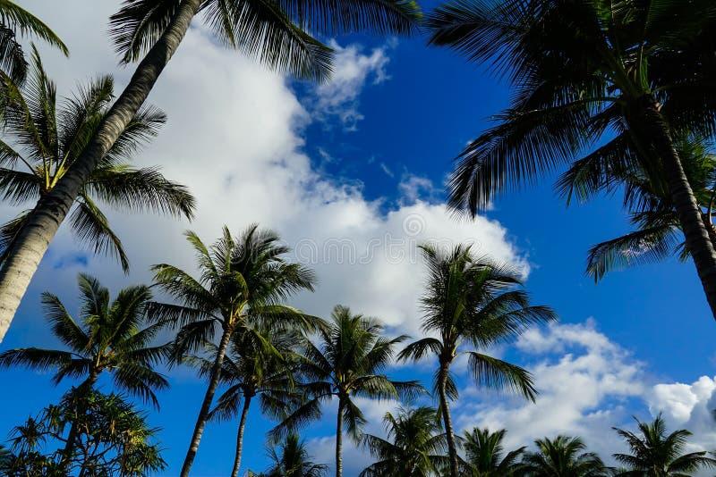 Голубые небеса и пальмы стоковые изображения