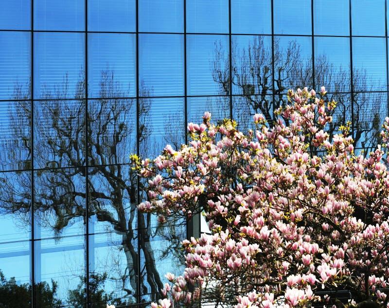 голубые окна весны стоковая фотография rf