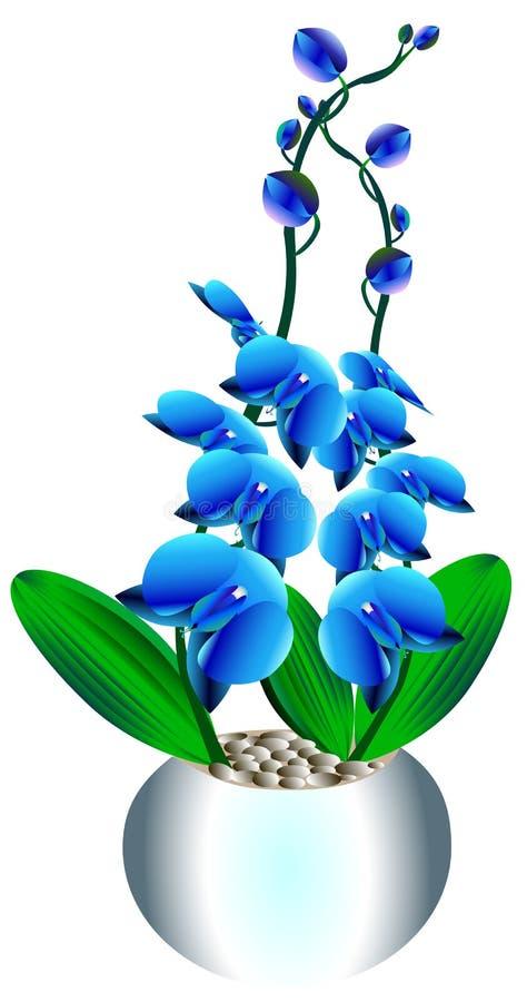 Голубые орхидеи в баке с листьями иллюстрация штока