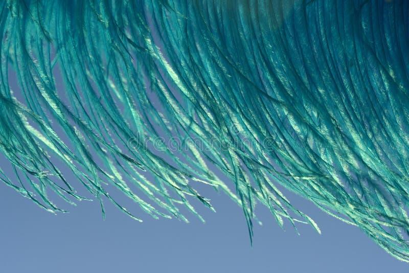Голубые пер страуса стоковое изображение rf