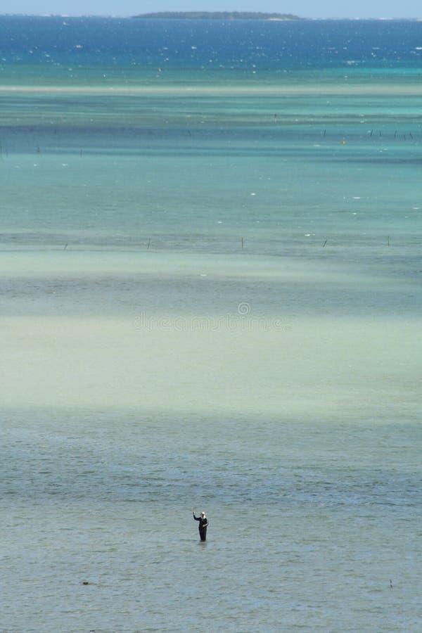 голубые тени стоковая фотография